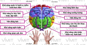 Mô hình não bộ